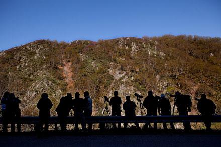 Un grupo de personas observa osos pardos en una ladera de un monte próximo a Larón (Cangas del Narcea). 3 de mayo de 2013.  © Miki López/La Nueva España