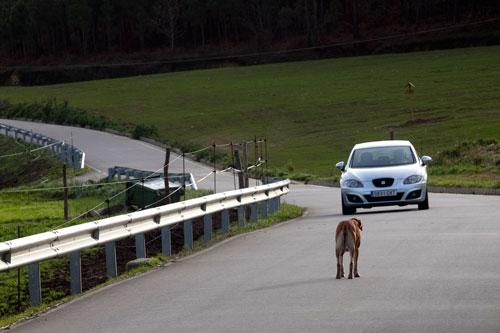 Perro en la carretera. El Franco. 3 de enero de 2014. © Miki López