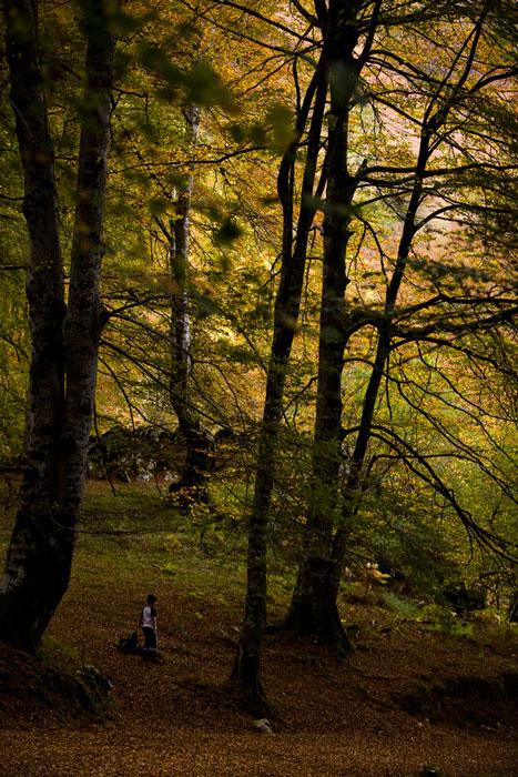 Bosque del Infierno. Piloña, 2010. © Miki López