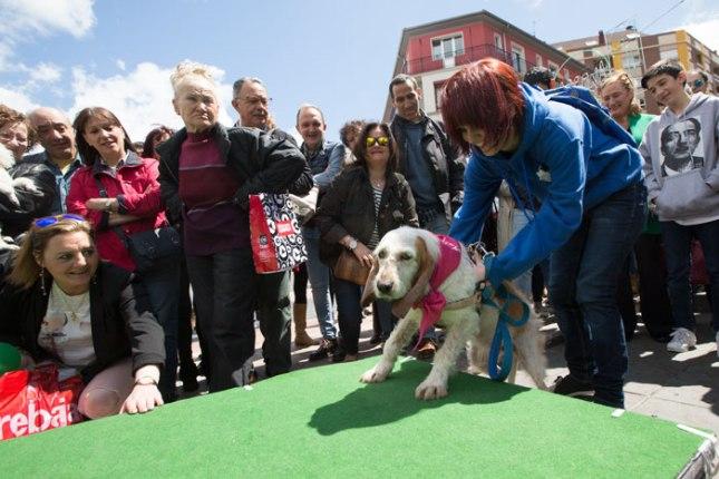 Desfile de perros abandonados en Gascona. Calle Gascona, Oviedo. 22 de mayo de 2016. © Miki López/La Nueva España