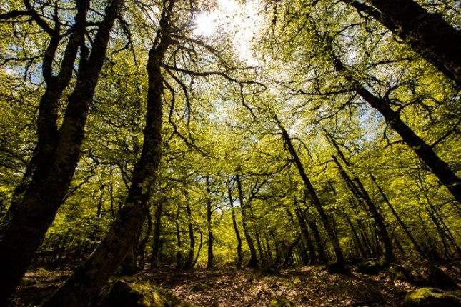Bosque en los Picos de Europa. 19 de mayo de 2016. © Miki López/La Nueva España